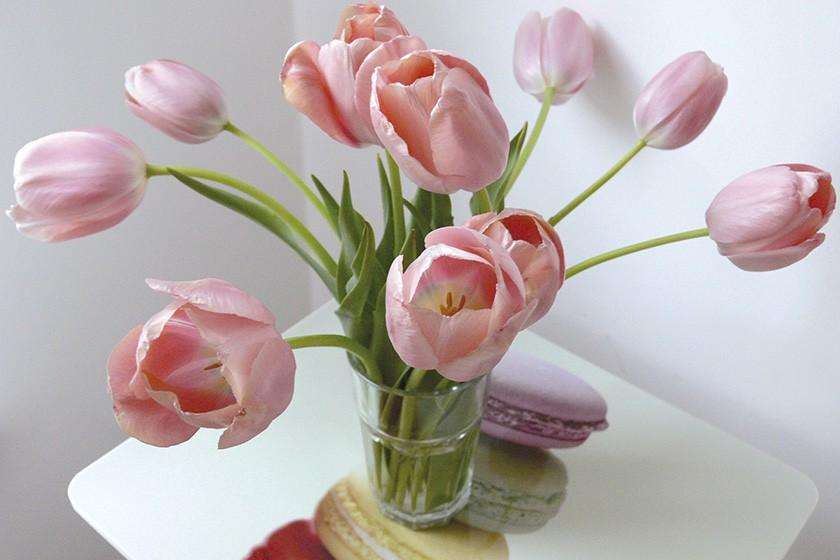Tulpen rose