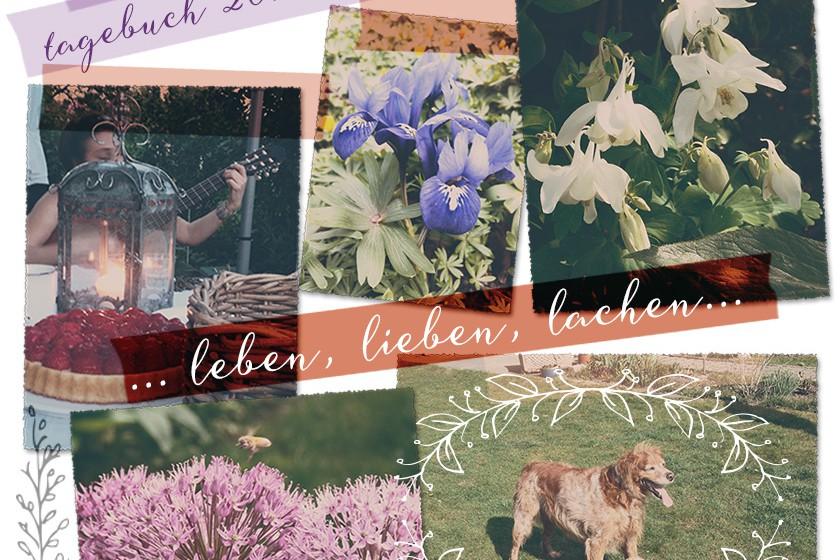 Gartentagebuch 2015-Blogteaser