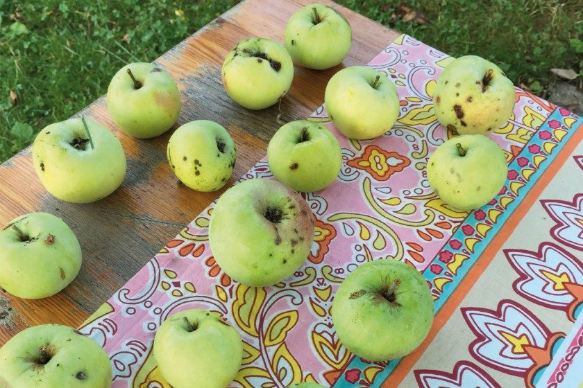 gartenapfel